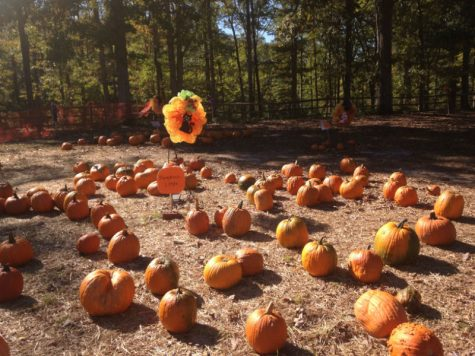 A Pumpkin-Picking Frenzy