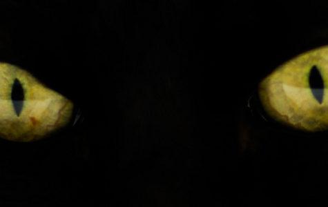 Mattt.org on Flickr captures an image of a cat's green eyes.