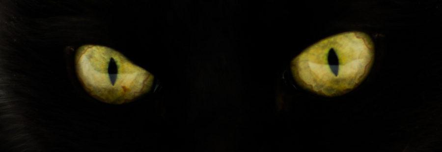 Mattt.org+on+Flickr+captures+an+image+of+a+cat%27s+green+eyes.