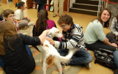 Animal Therapy Heals