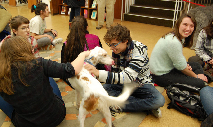 Many+colleges+use+animal+therapy+to+help+students+relieve+stress.
