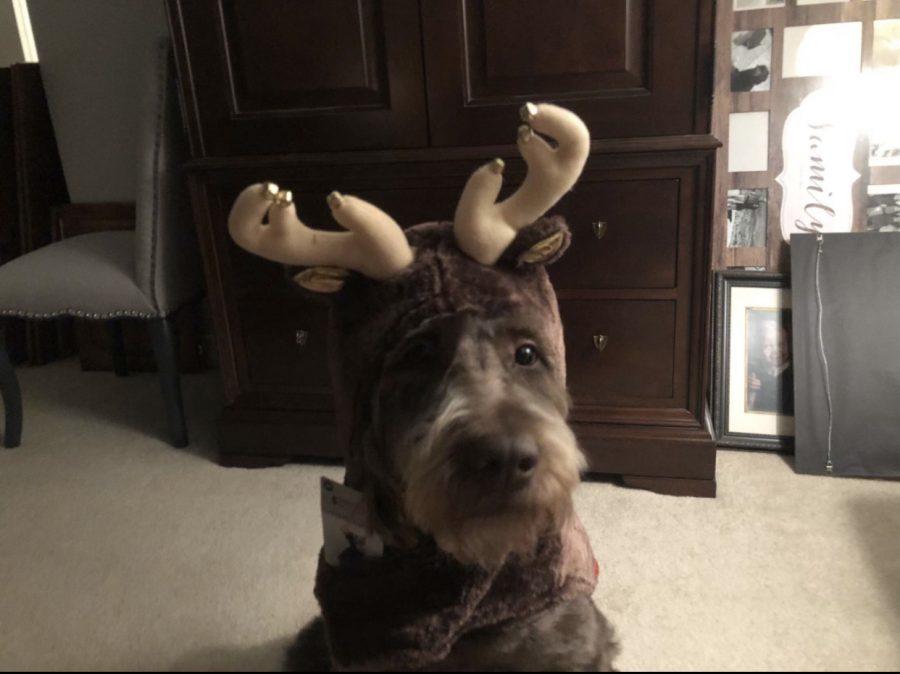 Jazz shows off her reindeer antlers.