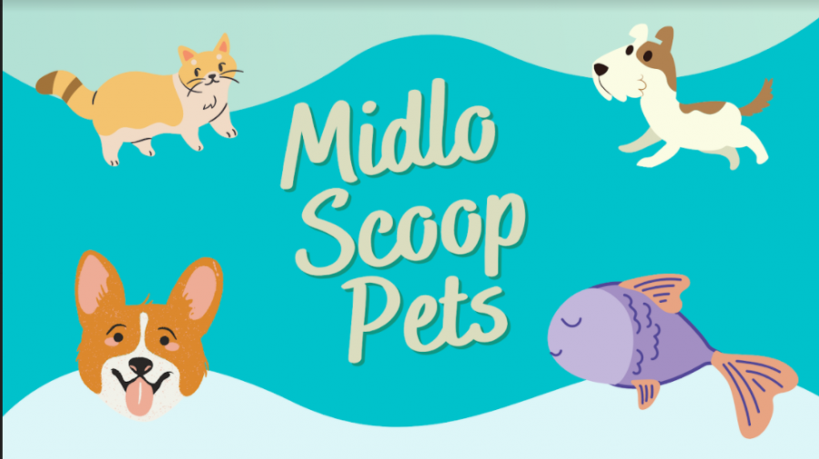 Midlo+Scoop+staffers+show+off+their+furry+companions