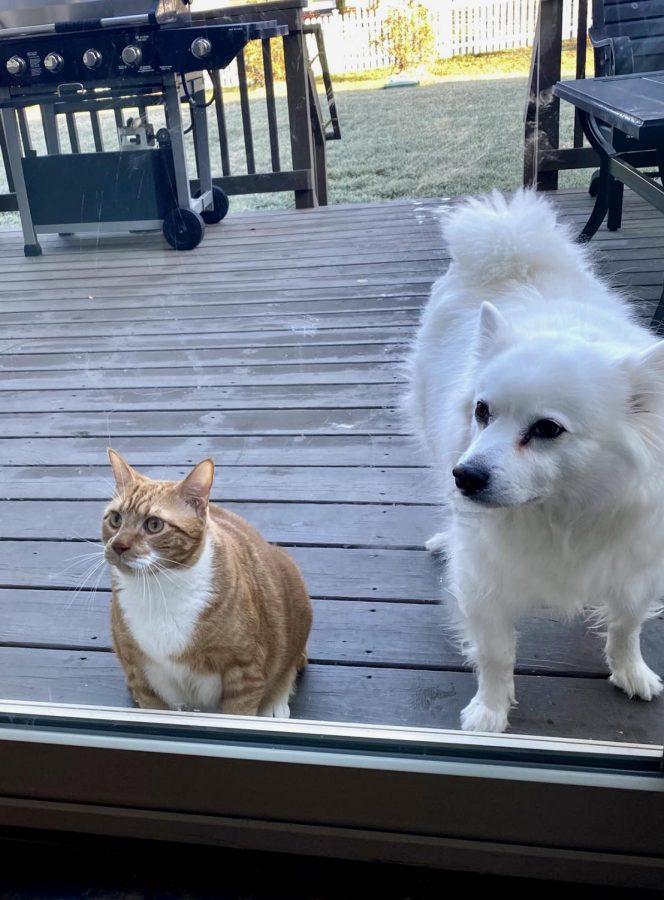 Pumpkin and Spike focus their attention on their best friend, Kyle Reeder.