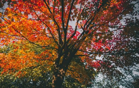Midlo students share their favorite parts of the fall season.