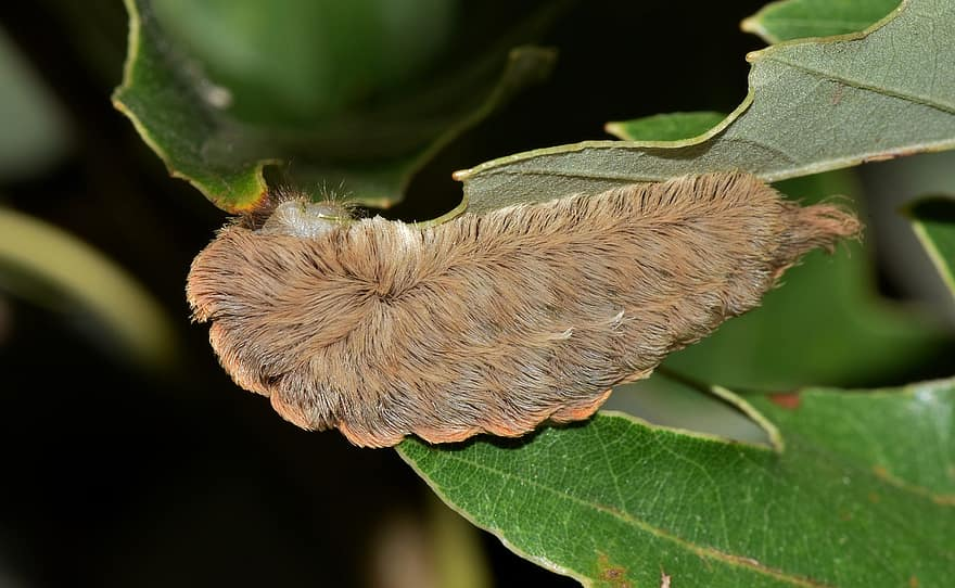 The+puss+caterpillar%2C+a+highly+venomous+insect%2C+makes+its+way+into+the+state+of+Virginia+in+2020.