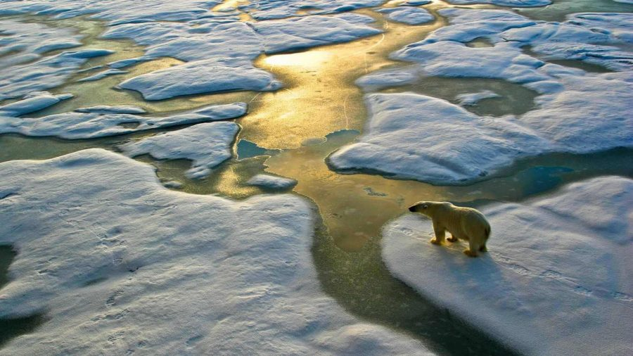 A+polar+bear+stand+on+an+iceberg+as+it+floats+through+a+fjord+because+of+winters+becoming+milder+in+north%2C+causing+snow+to+melt+as+temperatures+rise+above+freezing.